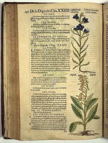 rembert latino personals Rembert dodoens (b rembert van joenckema, 29 june 1517 his latin translation of 1583, the stirpium or pemtdades, was also a considerable revision.
