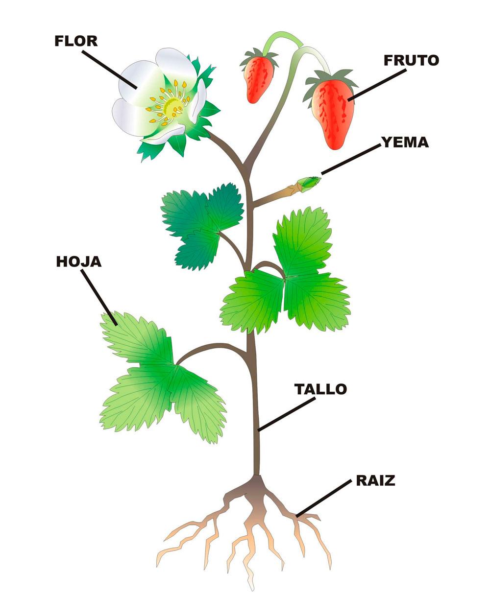 qué son las plantas principia