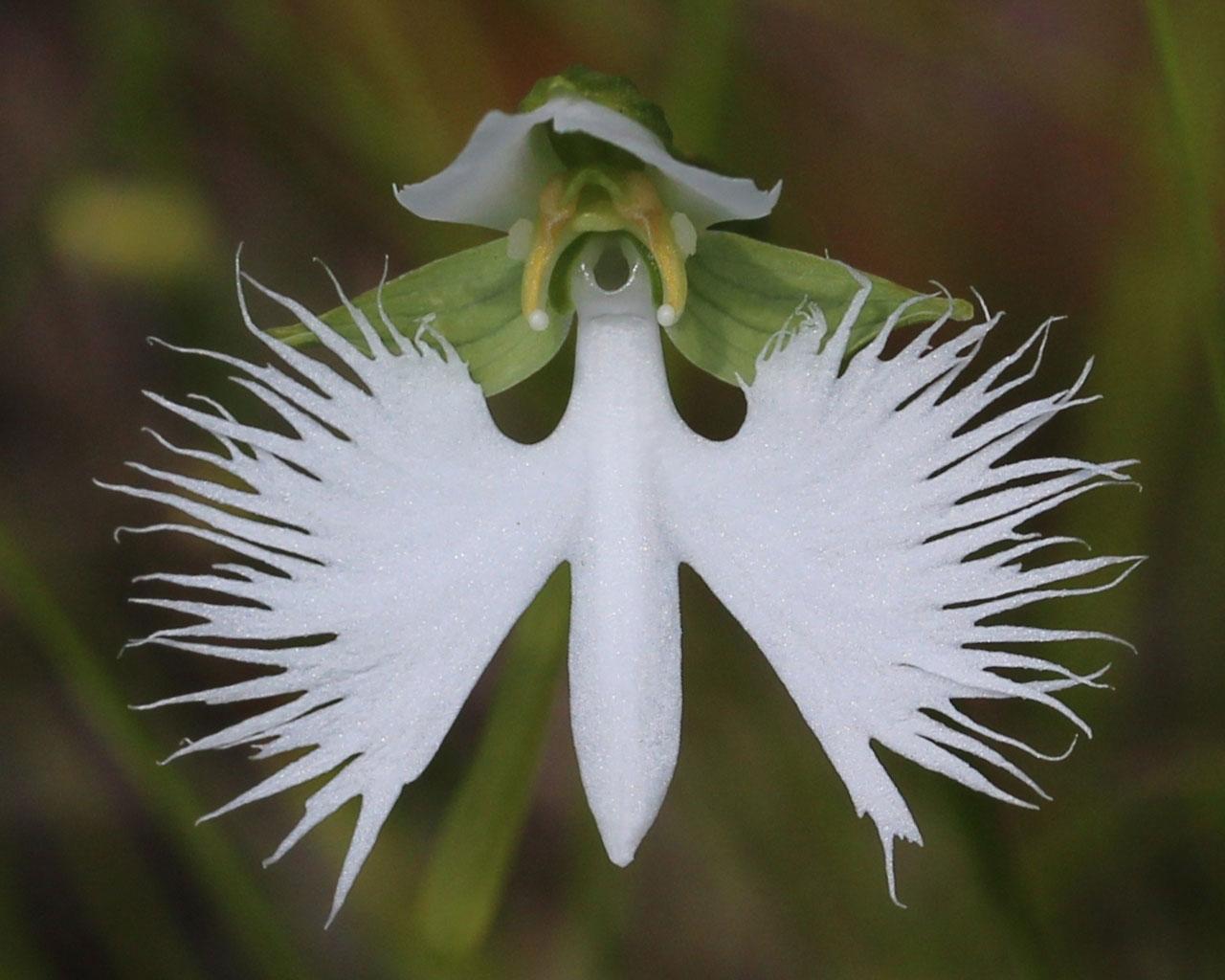 Plantas Exoticas Principia